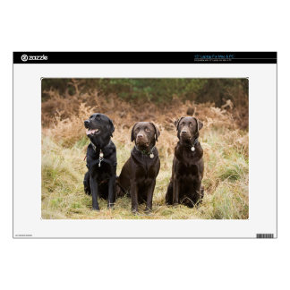 "Three Black Labrador retrievers 15"" Laptop Decals"