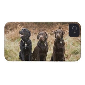 Three Black Labrador retrievers iPhone 4 Covers
