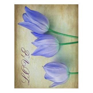 Three Blue Tulips Postcard