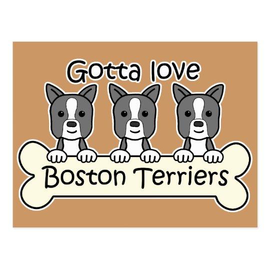 Three Boston Terriers Postcard