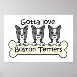 Three Boston Terriers Poster
