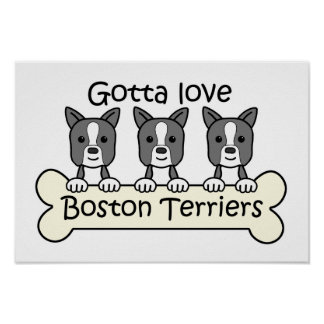 Three Boston Terriers Poster