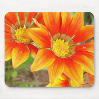 Three Bright Colored Gazania Flowers and Garden Mouse Pads