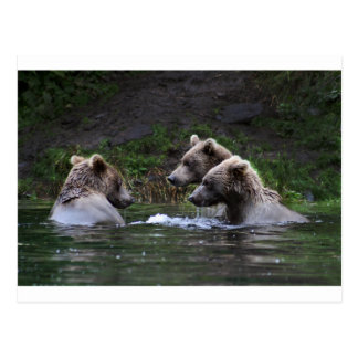 Three Brother Bears Postcard