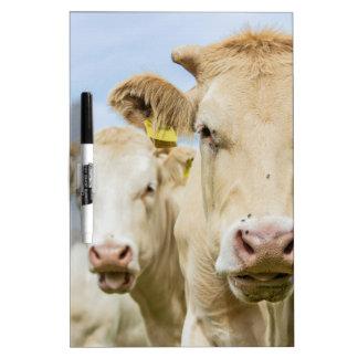 Three brown cows Dry-Erase boards