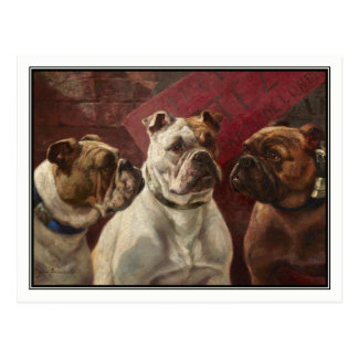 Three Bulldogs by Charles Boland Postcard