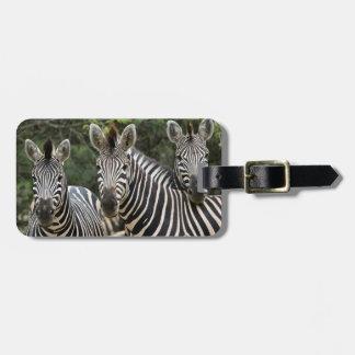 Three Burchell's Zebra (Equus Burchellii) Stand Bag Tag