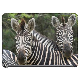 Three Burchell's Zebra (Equus Burchellii) Stand iPad Air Covers