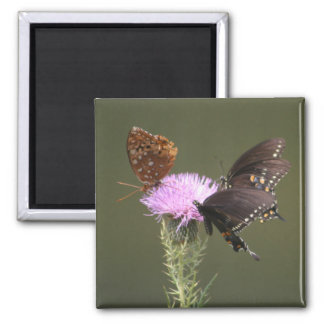 Three Butterflies on Thistle Magnet