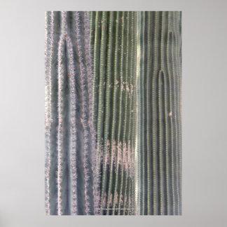 Three Cacti Poster