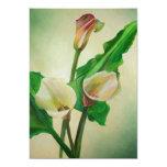 Three Calla Lilies Announcement