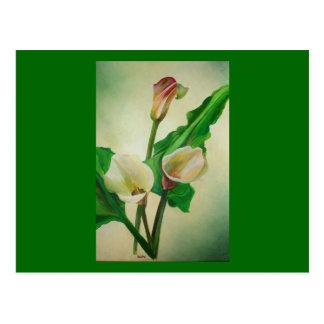 Three Calla Lilies Post Card