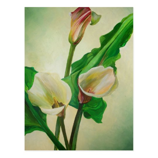 Three Calla Lilies Postcard