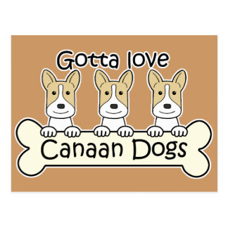 Three Canaan Dogs Post Cards