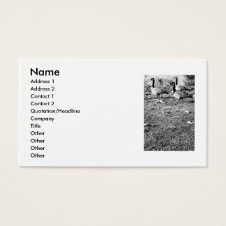 Three Canadian Geese Business Card