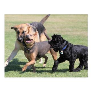 Three Canine Playmates Postcard