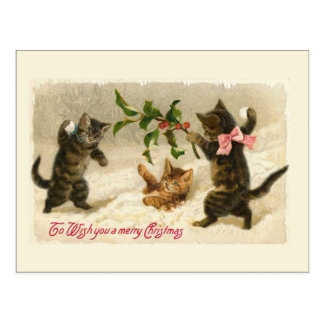 Three cats and a Holly branch Postcard