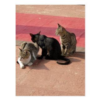 Three cats in a pensive mood postcard