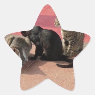 Three cats in a pensive mood star sticker