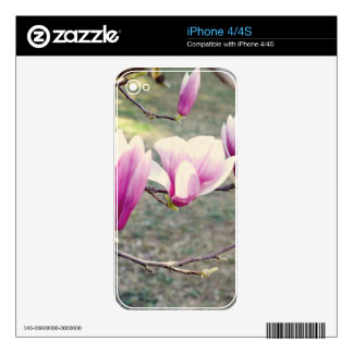 Three Cherry Blossoms Decal For iPhone 4