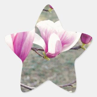 Three Cherry Blossoms Star Sticker