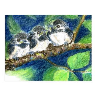 Three Chick-a-Dees - Watercolor Pencil Postcard