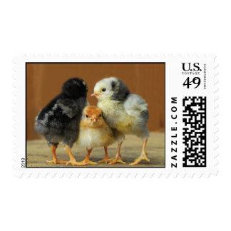 Three Chickens Stamp