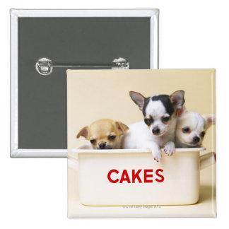 Three chihuahua puppies in cake tin button