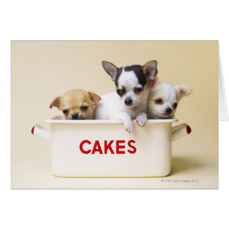 Three chihuahua puppies in cake tin card