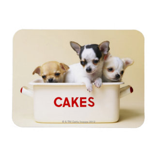 Three chihuahua puppies in cake tin rectangle magnet