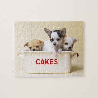Three chihuahua puppies in cake tin puzzle