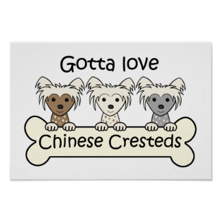 Three Chinese Cresteds Poster
