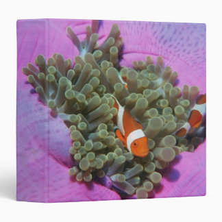 Three Clown Fishes on Sea Anemone, Andaman Sea Binder
