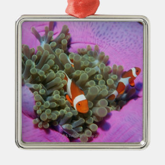Three Clown Fishes on Sea Anemone, Andaman Sea Metal Ornament