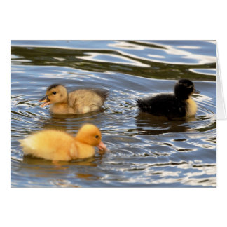 Three coloured ducklings greeting cards