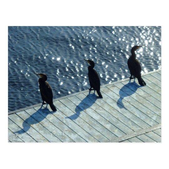 Three Cormorants Postcard