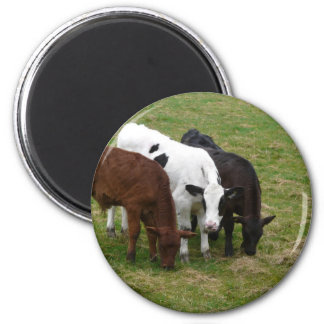 Three Cow Amigos 2 Inch Round Magnet