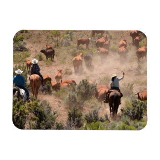 Three cowboys and cowgirls driving cattle magnets
