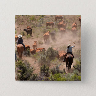 Three cowboys and cowgirls driving cattle pinback button