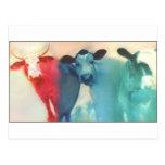 Three Cows Post Card