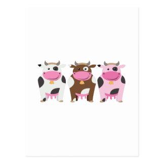 Three Cows Postcard