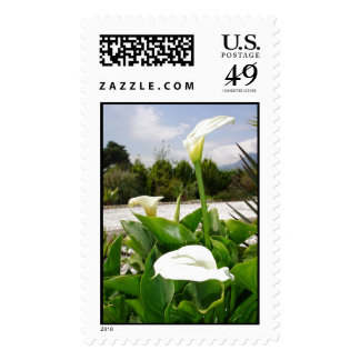 Three Cream Calla Lilies With Garden Background Postage Stamps