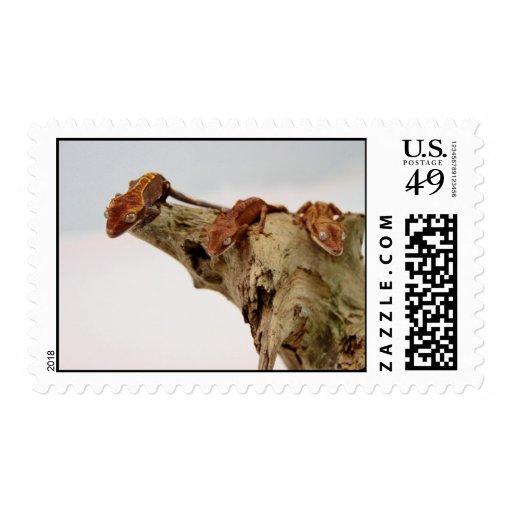Three Crested Geckos Postage