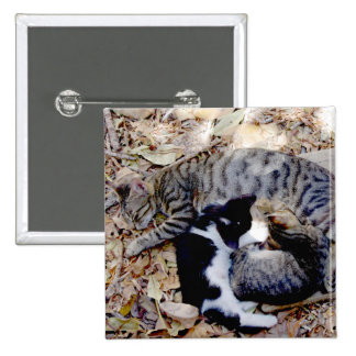 Three Cute Cats Curled Up Asleep Pin