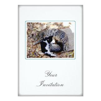 Three Cute Cats Curled Up Asleep Card