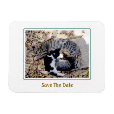 Three Cute Cats Curled Up Asleep Magnet at Zazzle