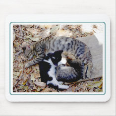 Three Cute Cats Curled Up Asleep Mouse Pad at Zazzle