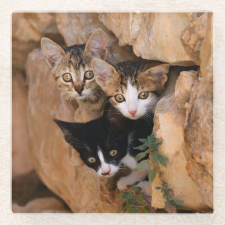 Three Cute Curious Cat Kittens Photo, Table-Decor Glass Coaster