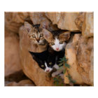 Three cute curious kittens poster
