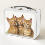 """Three Cute Ginger Cat Kittens Friends Head Photo / Metal Lunch Box<br><div class=""""desc"""">Three cute ginger little kittens, red mackerel tabby, European Shorthair, side by side, heads close together, the eyes look interested in the camera. They wait and see what happens, photo taken by Katho Menden. This metal lunch box is a gift idea for pet and cat lovers. http://www.zazzle.com/kathom_photo If you are...</div>"""